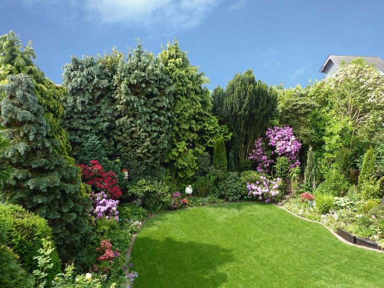 View into our Garden