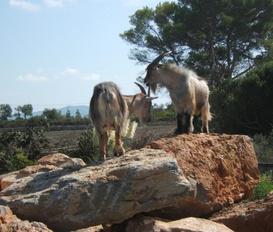 accommodation Santa Margalida/ Can Picafort