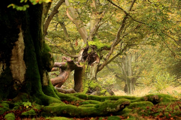 Wald am Edersee