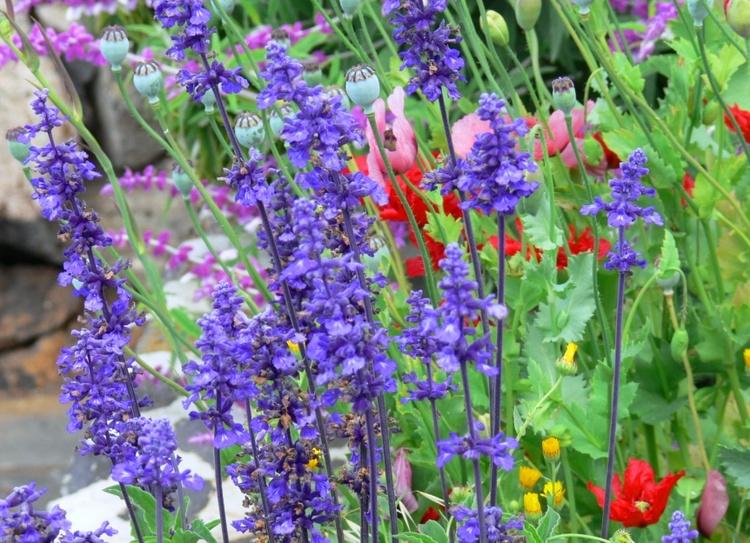 blühende Pflanzen im ganzen Jahr