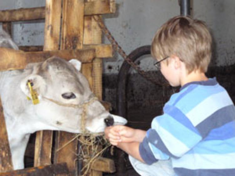 Die Kälber freuen sich über Streicheleinheiten