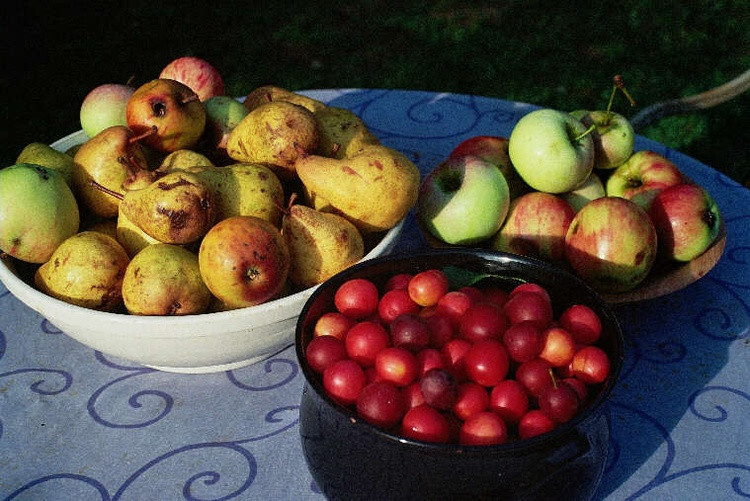 Obst aus dem Garten